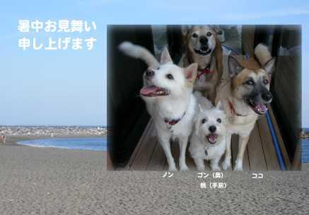 2008暑中お見舞い完成.jpg